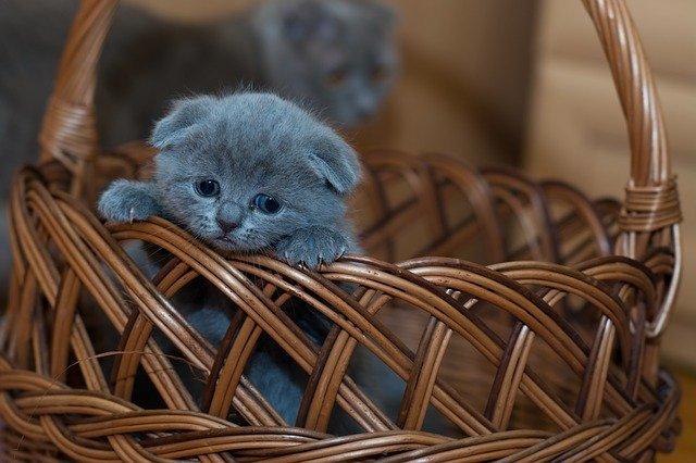 Trovet Kitten Milk (KMS) - Petissimo